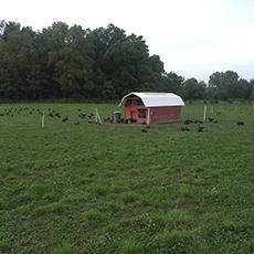 farm-gallery-3