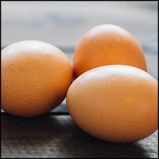 pastured-eggs-1