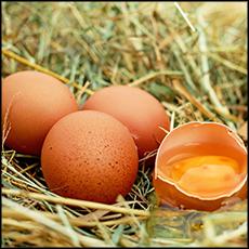 pastured-eggs-3